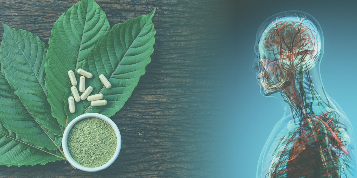 Kratom leaves, pills and powder next to an image of the human body