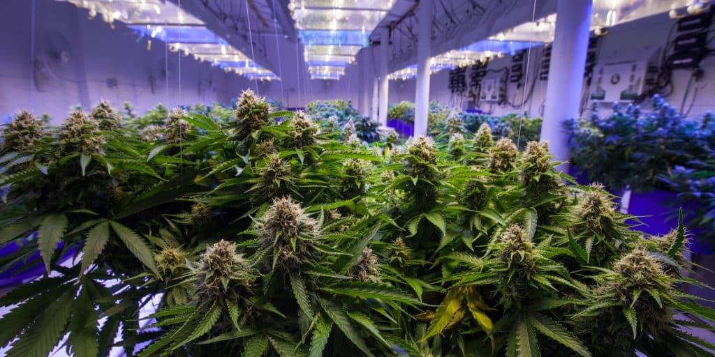 Marijuana growing facility